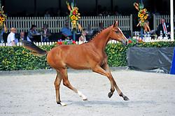 025 - Iowa<br /> Merrieveulens Springen<br /> KWPN Paardendagen Ermelo 2013<br /> © Hippo Foto - Leanjo de Koster