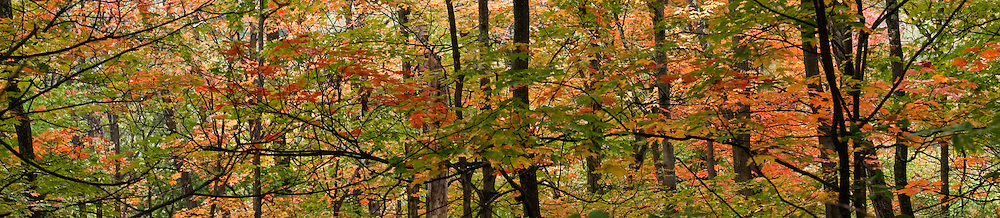 Woods in fall in the Adirondacks