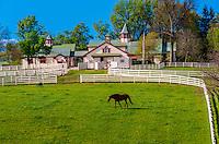 Calumet Farm (thoroughbred horse farm), Lexington, Kentucky USA.