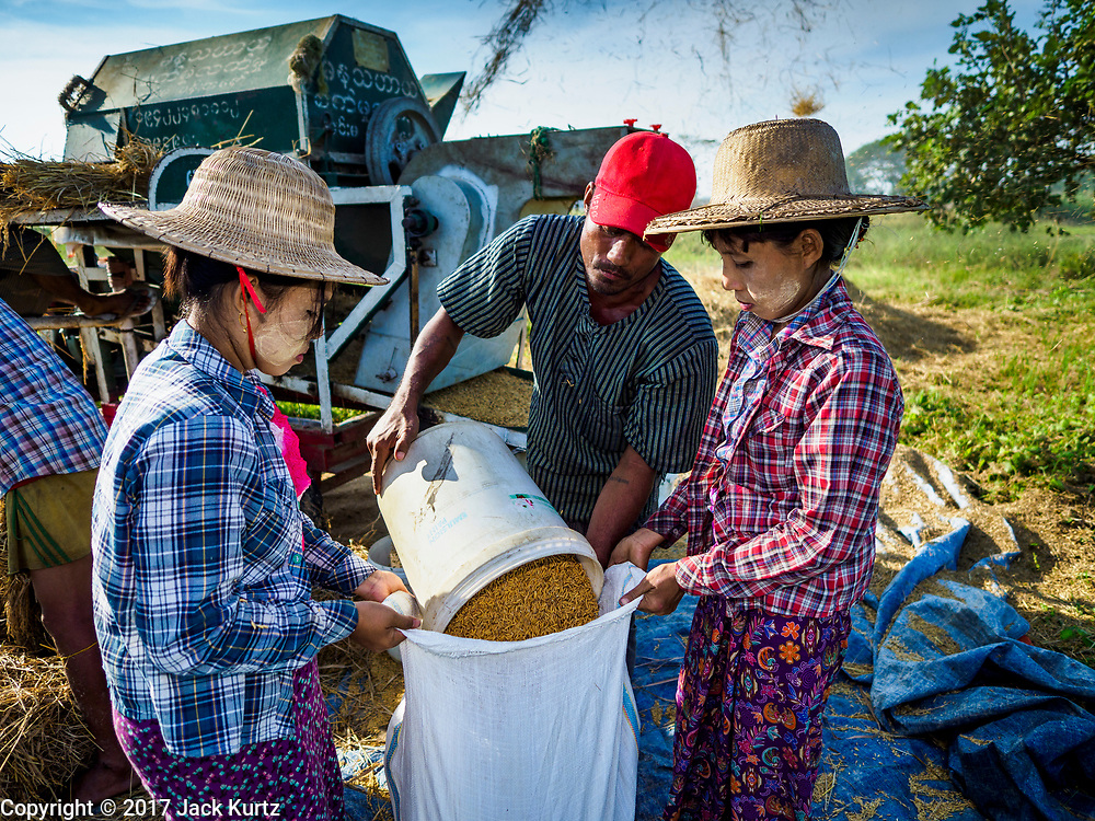 "21 NOVEMBER 2017 - MAUBIN, AYEYARWADY REGION, MYANMAR: Women bag rice after it was threshed in the Ayeyarwady  Delta. Myanmar is the world's sixth largest rice producer and more than half of Myanmar's arable land is used for rice cultivation. The Ayeyarwady Delta is the most important rice growing region and is sometimes called ""Myanmar's Granary."" The UN Food and Agriculture Organization (FAO) is predicting that the 2017 harvest will increase over 2016 and that exports will surge to 1.8 million tonnes.   PHOTO BY JACK KURTZ"