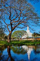 Sri Lanka, province du Centre-Nord, site d'Anuradhapura classé Patrimoine Mondial de l'UNESCO, capitale du Sri Lanka au IIIe siècle avant JC, Dagoba  de Ruvanvelisaya // Sri Lanka, North Central Province, Anuradhapura, historic capital of Sri Lanka, UNESCO World Heritage Site, Ruvanvelisaya dagoba