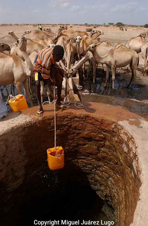 El Barde, Somalia.   A young herder pulls a bucket of water for his camels to drink  from  a water well near to  a food distribution center run by the World Food Programme in El Barde, Somalia.  This region of northern Somalia, close to the Ethiopia's border has been suffering for  years  a severe drought. (PHOTO: MIGUEL JUAREZ LUGO)