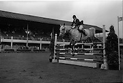 "09/08/1962<br /> 08/09/1962<br /> 09 August 1961<br /> RDS Horse Show, Ballsbridge Dublin, Thursday. <br /> Picture show ""Irish Lace"" ridden by Miss Virginia Freeman-Jackson, Cool-na-Grena, Mallow, Co. Cork."