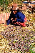 PERU, LAKE TITICACA, UROS floating islands; woman drying fish