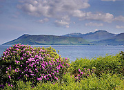 Spring view from kintyre towards the isle of Arran, Argyll