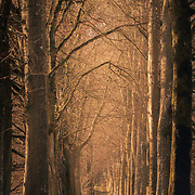 The beech tree avenue leading to Drummond Castle, Muthill, Perthshire