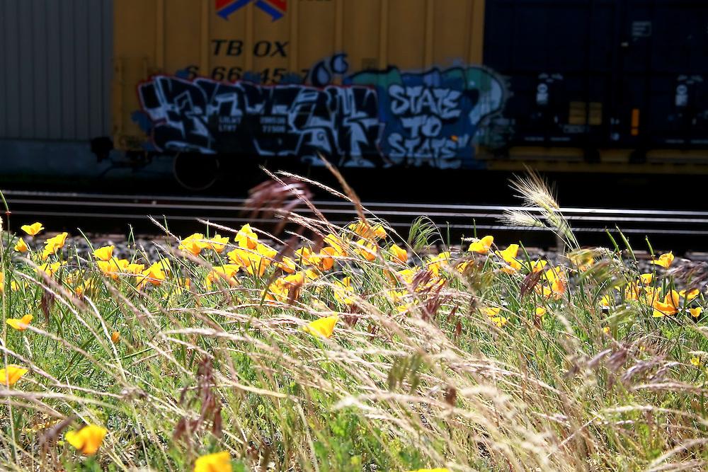 graffiti images