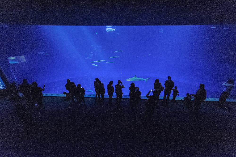 Monterey, California, Monterey Bay Aquarium