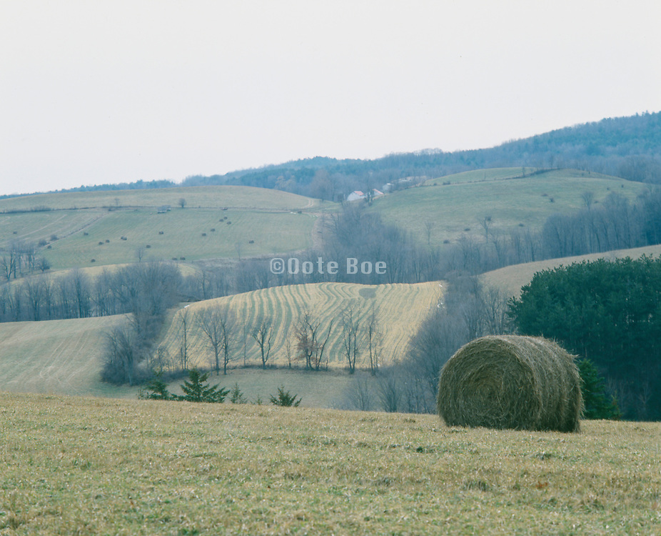 Roll of harvested hay in a field upstate New York