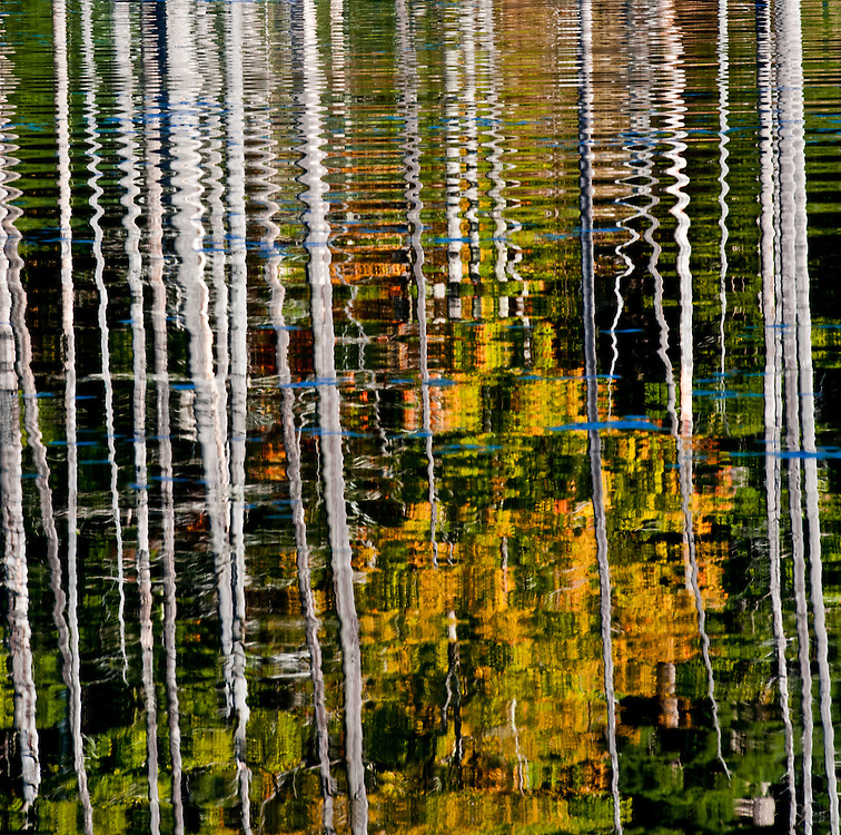 Photograph of reflections of trees in fall color in a beaver pond in the Adirondacks at Wilmington NY