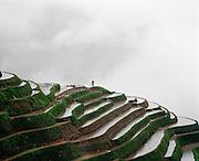 Longji Titian (nom que l'on donne a? ce complexe de terrasses) dans la province de Guangxi. Les habitants font partie des Zhuang, la minorite? ethnique de Chine la plus nombreuse.