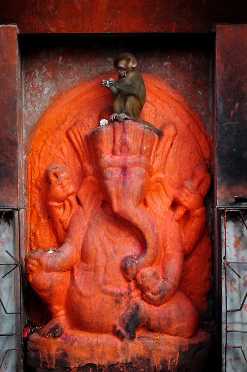 A baby monkey picks apart the flower offering resting above an orange ganesh sculpture at Pashupatinath Temple, in Kathmandu.