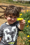 smiling Young boy of four offers a flower to the viewer Model Release Available