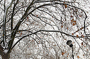 A broken lamp stands in a Roman park close to a tree whose branches are covered with snow