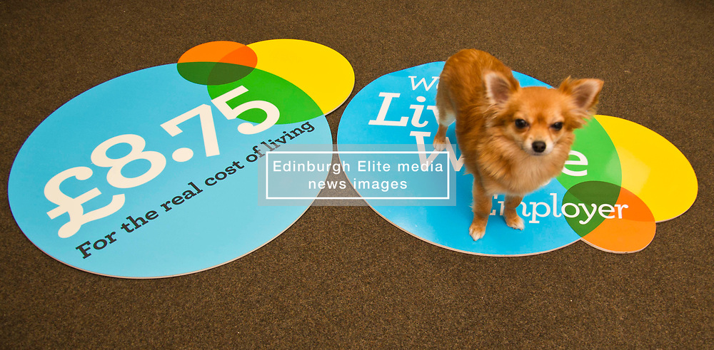 Pictured: Office dog Nell who helsp reduce stress on a daily basis<br /> <br /> Employability and Training Minister Jamie Hepburn visited soapmaking company Gracefruit today as labour market statistics are published. He met staff who receive the living wage and also heard from the company's owner Beth Carnahan how it is working to address the impact of Brexit and how it is adopting more flexible working model with many staff working around 23 hours per week.<br /> Ger Harley   EEm date