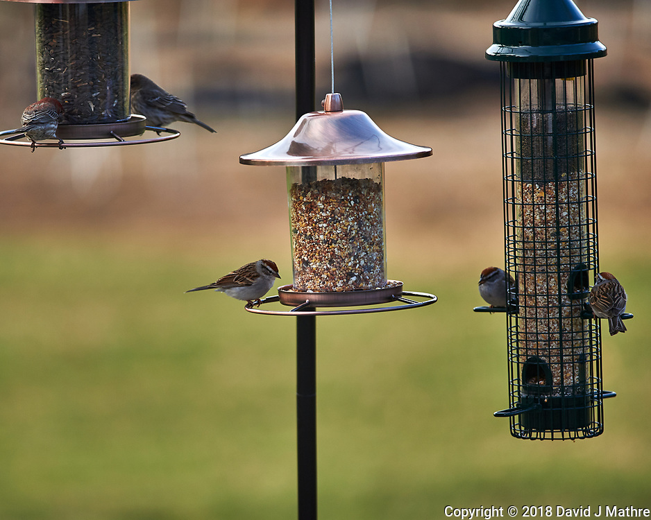 Five Small Birds. Image taken with a Nikon Df camera and 300 mm f/4 telephoto lens (ISO 320, 300 mm, f/4, 1/320 sec)