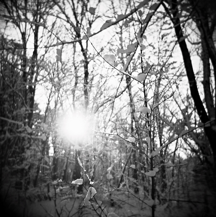 Sunshine on branches covered with snow in woods, Chatham, NY, US