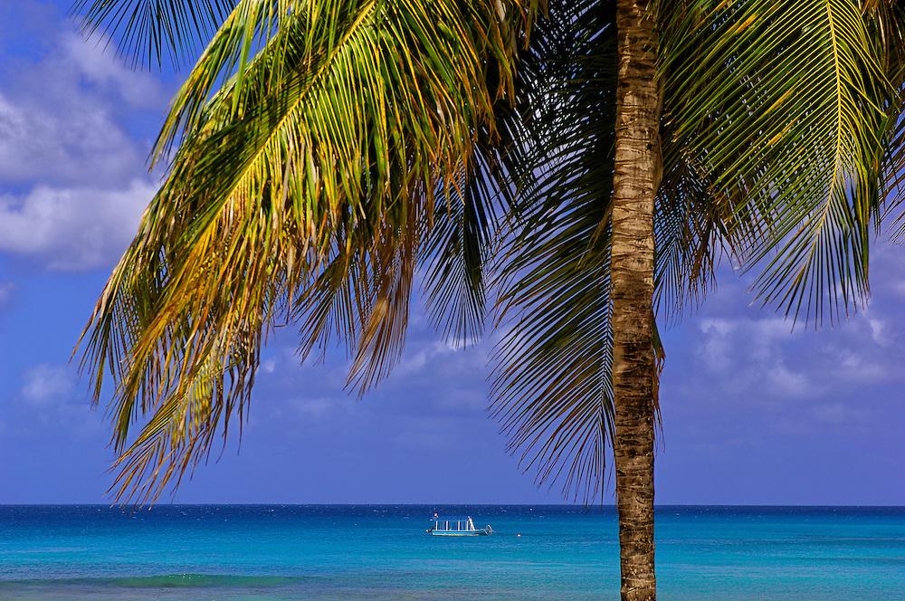 Palm Trees at Kings Beach, West Coast, Barbados, Caribbean