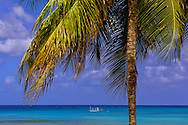 Palm Trees at Kings Beach, West Coast, Barbados, Caribbean