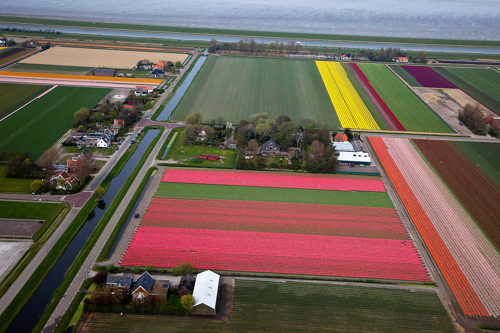 Nederland, Noord-Holland, Gemeente Anna Paulowna, 28-04-2010;  bloembollenvelden in de Anna Paulowna Polder in de omgeving van Breezand, voornamelijk tulpen. Door de zandgrond is de polder in Kop van Noord-Holland (Noordkop) is een ware bollenstreek..Flower fields in the Anna Paulownapolder, with mostly tulips. Because of the sandy soil the polder in the very north of North-Holland is a true flower bulb region. .luchtfoto (toeslag), aerial photo (additional fee required).foto/photo Siebe Swart