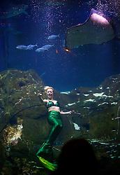 Weeki Weechee Mermaids at Adventure Aquarium, Camden NJ (Bas Slabbers/for Adventure Aquarium)
