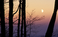 DEU, Germany, Bergisches Land region, trees and moon.....DEU, Deutschland, Bergisches Land, Baeume und Mond...
