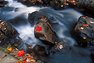 Maple leaves in fall color grace rocks along a swift moving section of the Yellow Dog River near Big Bay, Michigan.