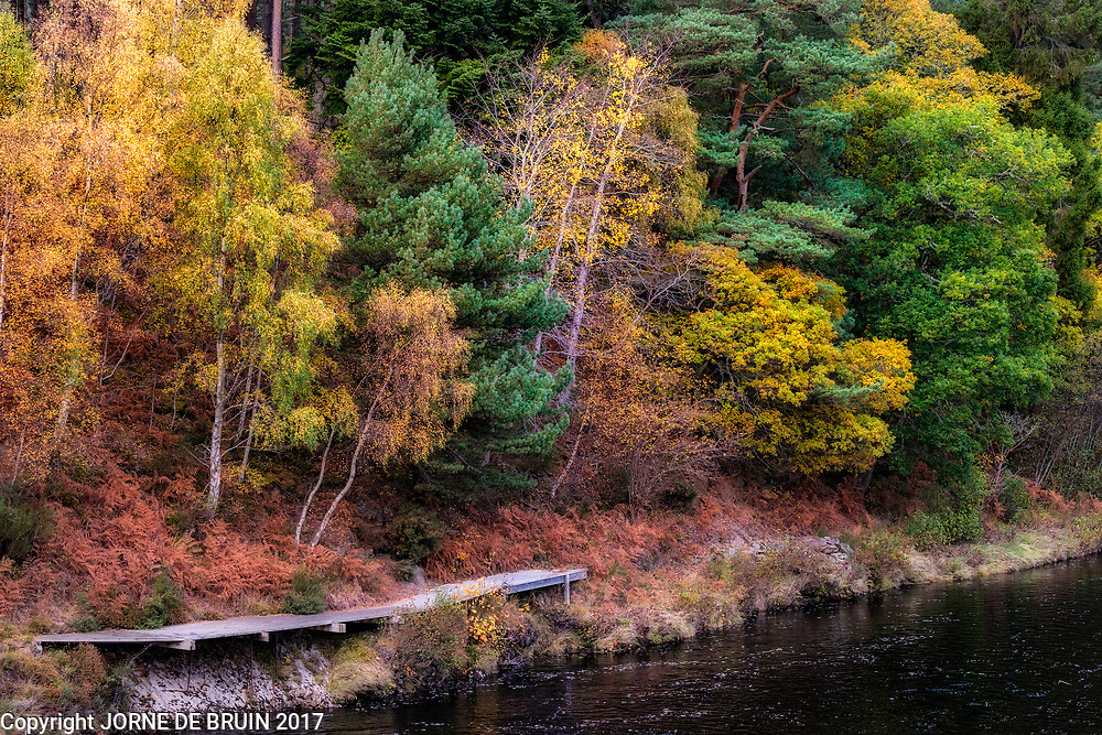Autumn colours along a stream in the Scottish Highlands.