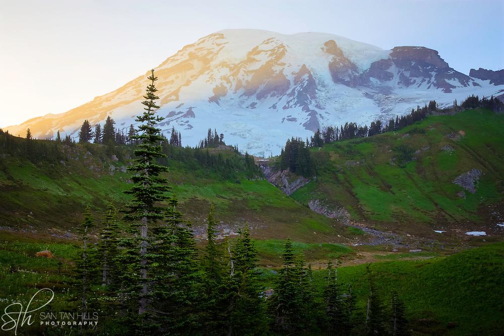Sunset view of Mount Rainier near Paradise - Mount Rainier National Park, WA
