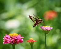 Backyard Summertime Nature in New Jersey. Image taken with a Nikon D5 camera and 200-500 mm f/5.6 VR lens
