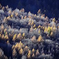 Alpi piemontesi, boschi autunnali della Val Chisone.