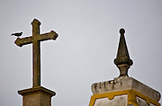 Jeceaba_MG, Brasil...Passaro em uma cruz em Jeceaba...A bird on the cross in Jeceaba...Foto: JOAO MARCOS ROSA / NITRO.