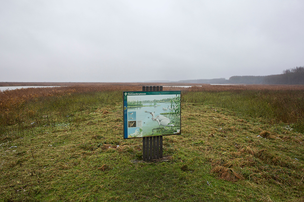 "View of the Oostverdesplassen nature reserve. The reserve is a wilderness that was constructed from reclaimed land. The reserve occupies fourteen thousand perfectly flat acres on the shore or the inlet turned lake. This area was originally designated for industry; however while it was still in the process of drying out, a handful of bioligist convinced the Dutch government that theland would be better used to recreate a paleolithic landscape. The biologist set aboutstocking the Oostverdesplassen with the sorts of animals that would have inhabited the region since prehistoric times had it not been underwater. For example, Heck cattle, were used in place by the extinct aurochs, these are cattle of a variety specially bred by Nazi scientists. The cattle grazed and multiplied, so did the red deer, the wild horses, the egrets, the geese and foxes. All were brought in from other countries. These mammals reproduced so prolifically that the German magazine Der Spiegel dubbed the Oostvaardesplassen ""the Serengeti behind the dikes."" Flevoland, Netherlands."