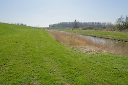 Wilgenreservaat, Zeewolde, Flevoland, Netherlands