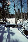 Aspen, Aspen Trees, Snow, Winter, Log Fence, Fence, Utah