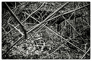 """An impenetrable bamboo forest in the grounds of the Pha Koeng Buddhist temple, Chaiyaphum Province, Northeast Thailand, 2016. From the series """"Pha Koeng""""  (2011-2017)."""
