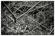 "An impenetrable bamboo forest in the grounds of the Pha Koeng Buddhist temple, Chaiyaphum Province, Northeast Thailand, 2016. From the series ""Pha Koeng""  (2011-2017)."
