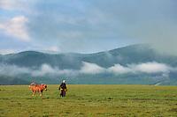 Mongolie, Province de Ovorkhangai, Vallee de l'Orkhon, campement nomade, homme et son cheval // Mongolia, Ovorkhangai province, Okhon valley, Nomad camp, horse and man