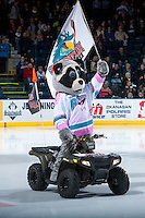 KELOWNA, CANADA - MARCH 5: Rocky Raccoon enters the ice at the Kelowna Rockets against the Kamloops Blazers on March 5, 2016 at Prospera Place in Kelowna, British Columbia, Canada.  (Photo by Marissa Baecker/Shoot the Breeze)  *** Local Caption *** Rocky Raccoon;