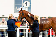 Simbirsk ridden by Shane Kelly and trained by John O'Shea in the F45 Bath Training Guaranteed Results Handicap race.  - Ryan Hiscott/JMP - 06/05/2019 - PR - Bath Racecourse- Bath, England - Kids Takeover Day - Monday 6th April 2019