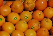 A pile of fresh and ripe Jaffa Oranges