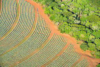 Aerial view of Pinapple Plantations, Hluhluwe, KwaZulu Natal, South Africa