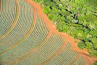 Aerial view of Pinapple Plantations, Hluhluwe, KwaZulu Natal, South Africa