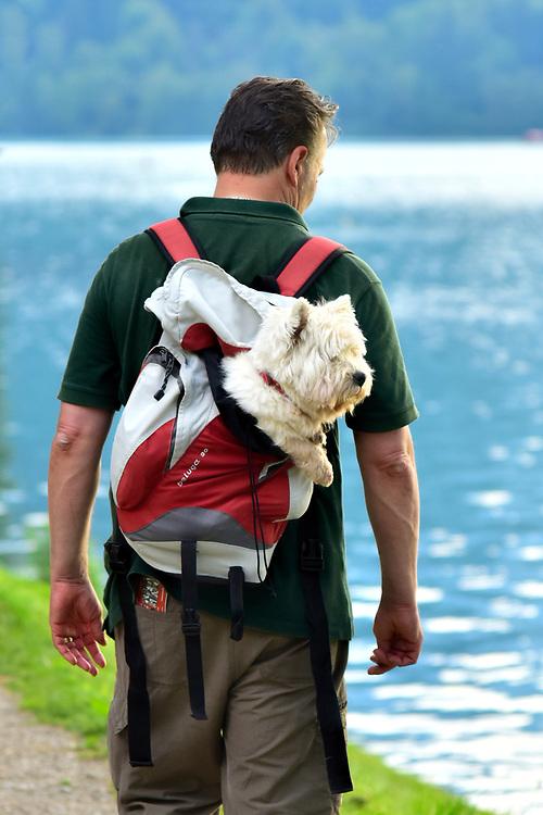 Europe, Balkan, Slovenia, Slovenian, Bled, man with hiking alonge the lake