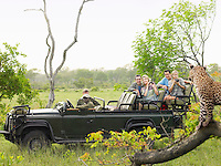 Tourists in jeep looking at cheetah standing on log