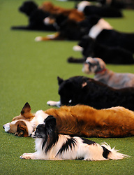 ©London News pictures. 10/03/11. Exhibitors and their dogs at Crufts 2011 held at The National Exhibition Centre in Birmingham today (Thurs). The show runs from 10 - 13 March 2011 Picture Credit should read Stephen Simpson/LNP