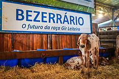 Bezerrário Gir Leiteiro