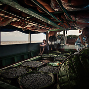 The açai is transported from the island of Combu to the Port of Concessão in Belem