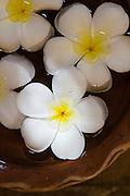 Väldoftande frangipani-blommor i en skål med vatten.