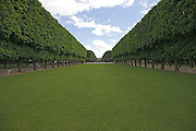 Tree lined lawn in Jardin Du Luxembourg Paris France